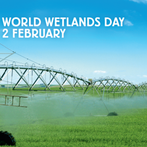 World Wetlands Day 2014 about wetlands and agriculture